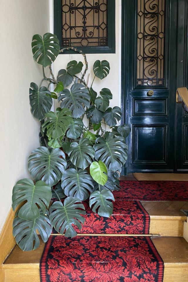 palier immeuble plantes vertes exemple plantes vertes tendance monstera