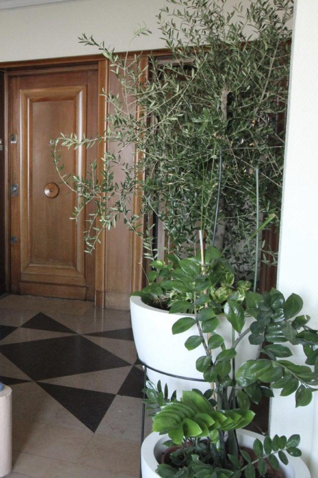palier immeuble plantes vertes exemple pot de fleurs