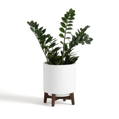 plante verte moral cache pot deco pas cher sur pied à poser blanc et bois foncé moderne