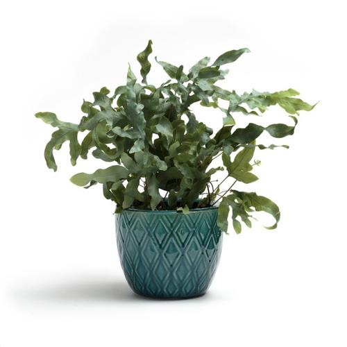plante verte moral cache pot deco style classique élégant bohème chic vert