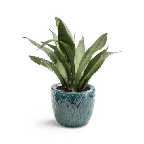 cache pot plantes depolluantes interieur style bohème couleur bleue
