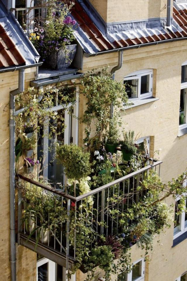 decoration balcon verdoyant plantes exemple exemple petit extérieur verdoyant plantes vertes