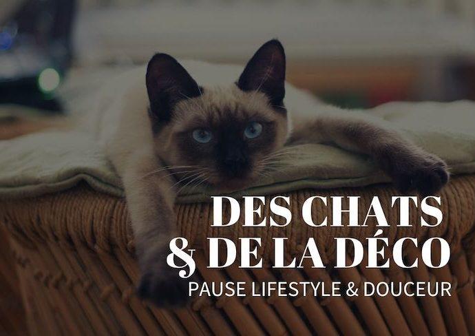 des chats et de la deco lifestyle blog décoration intérieure slow living nomade passion félin