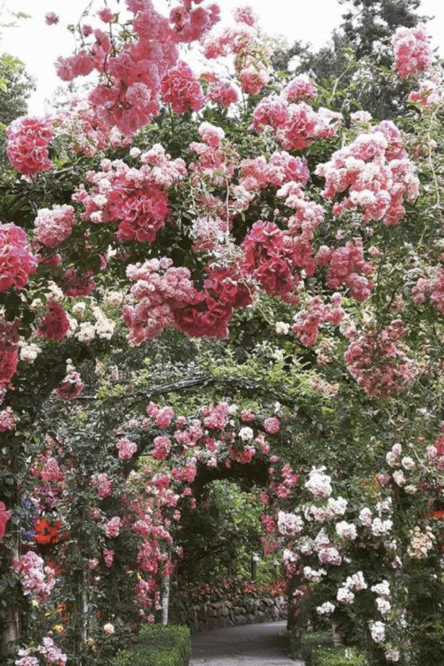 idee  joli jardin fleur rose allée avec fleur et armature romantisme anglais