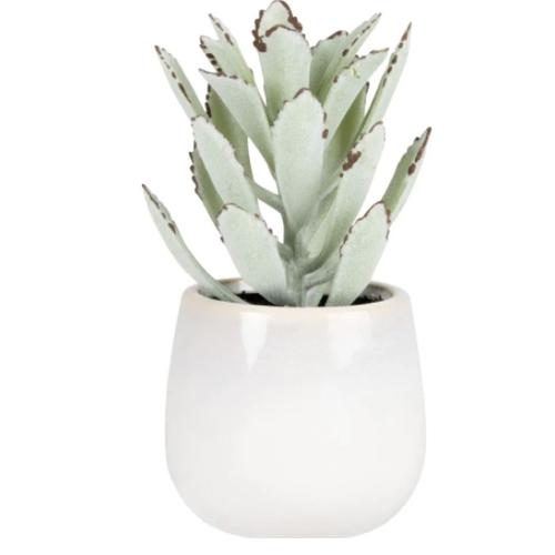 plante deco pot de fleur petit modele pour plantes grasses