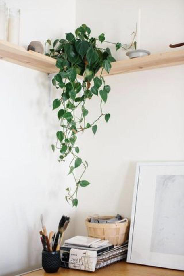 plante verte rampante deco bureau étagère murale d'angle en bois