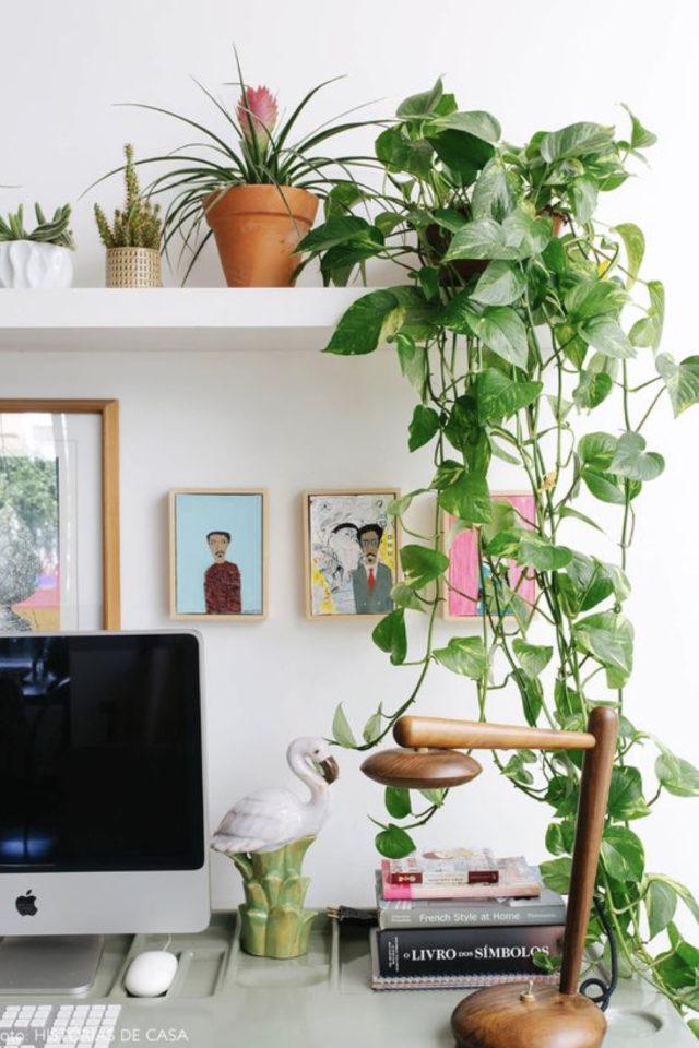 plante verte rampante deco bureau espace télétravail moderne étagère blanche ordinateur