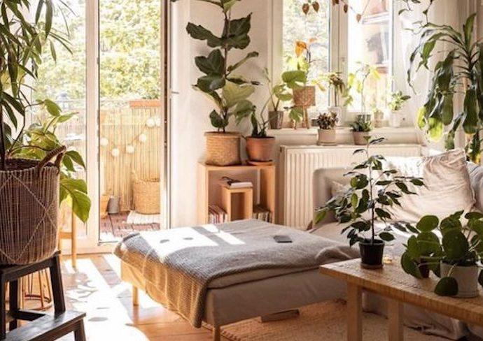 petit salon decoration plantes vertes lumière naturelle couleur neutre bois simplicité