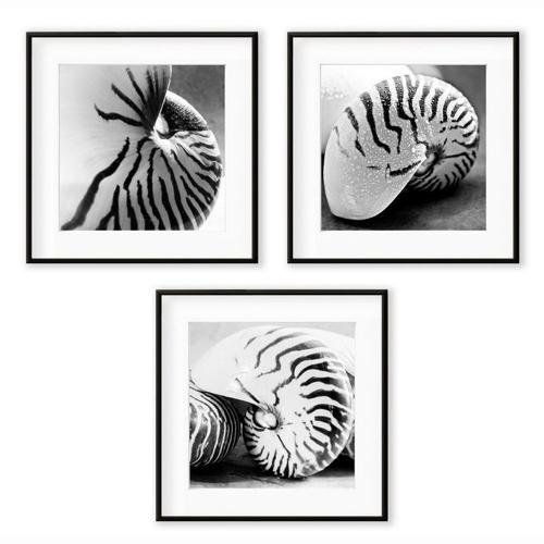 accessoire decoration forme coquillage photo en noir et blanc Triptyque