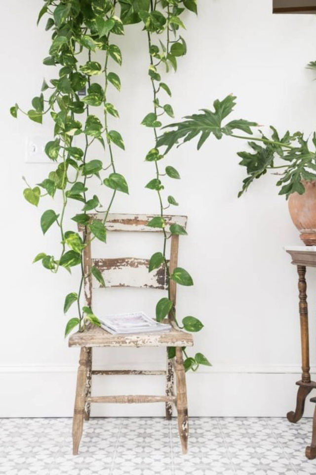 interieur plantes vertes pothos exemple échelle déco blanche salon séjour