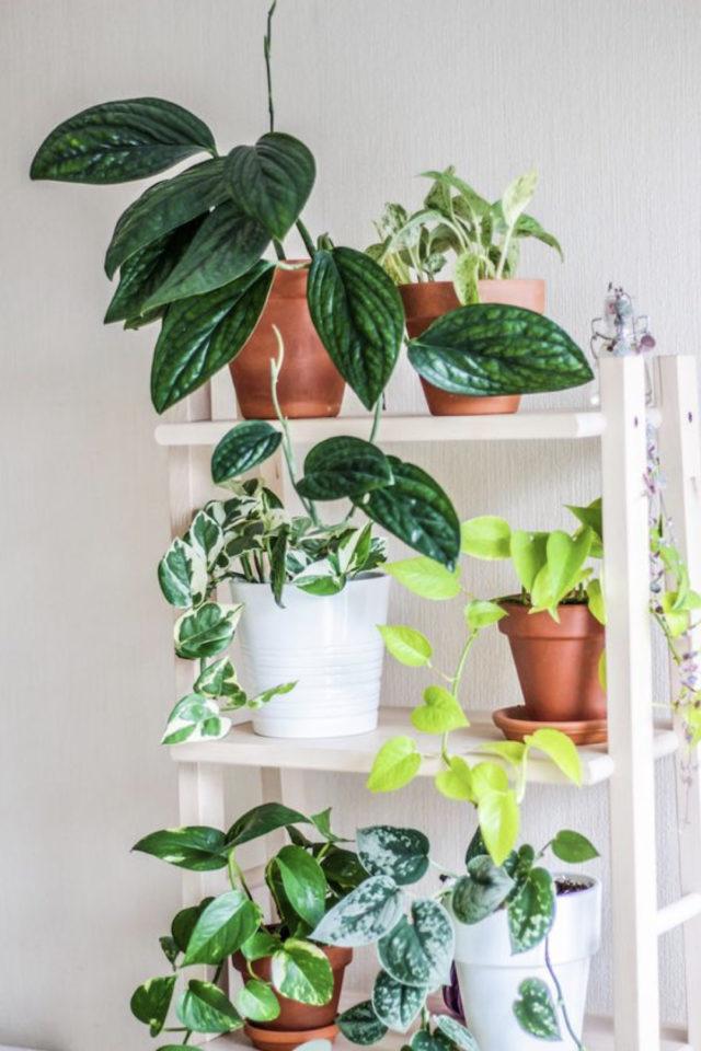 interieur plantes vertes pothos exemple échelle étagère blanche moderne