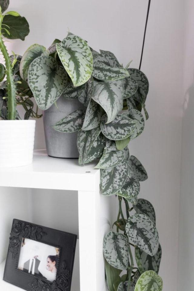 interieur plantes vertes pothos exemple petite étagère bibliothèque blanche