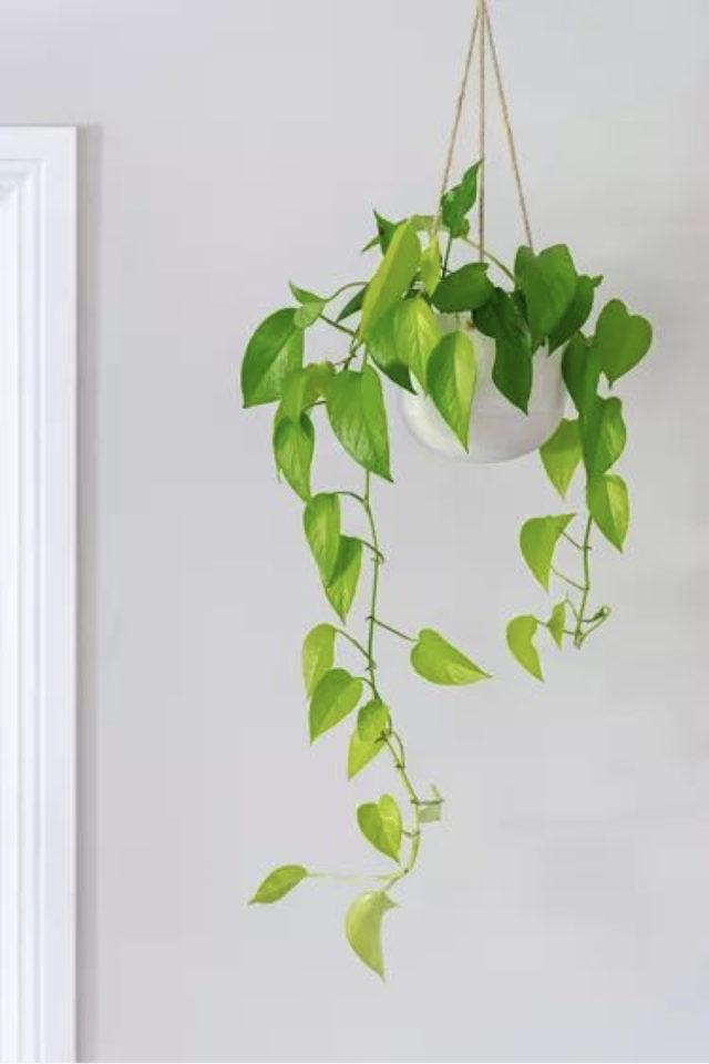 interieur plantes vertes pothos exemple cache pot suspendu blanc