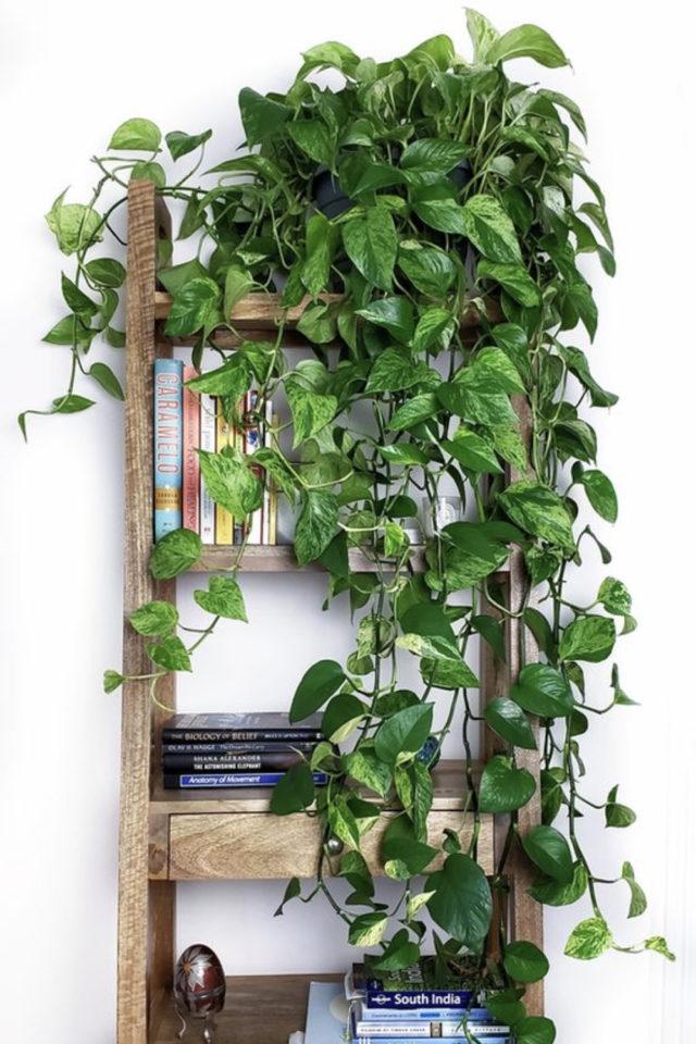 interieur plantes vertes pothos exemple étagère échelle bois verdoyant