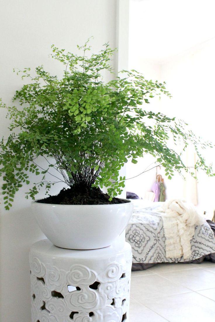 Deco Separation De Piece 10 idées pour mettre des plantes dans son intérieur | cocon