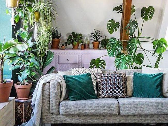 des plantes vertes dans le salon cocon d co vie nomade. Black Bedroom Furniture Sets. Home Design Ideas