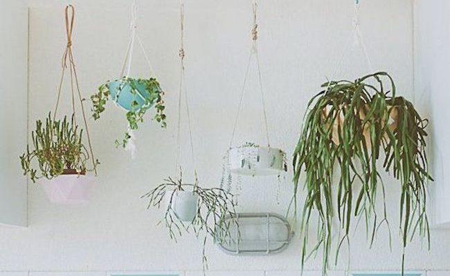 comment decorer cuisine avec plante