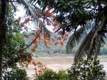 paysages laotiens voyage