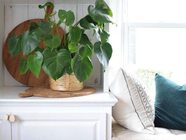 plantes indispensables decoration exotique