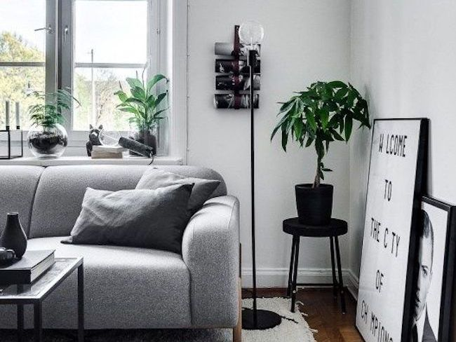 deco urban jungle plante et tabouret