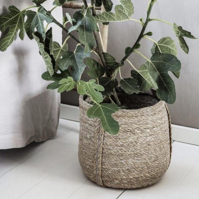 cache pot plante verte bureau decoration 11