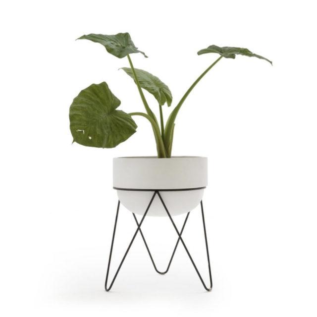 cache pot plante verte bureau decoration 12