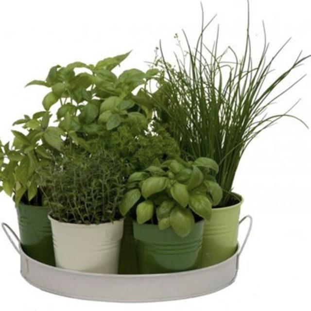 cache pot plante verte bureau decoration 13