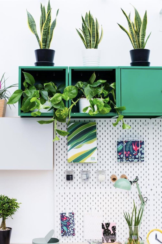 decorer le bureau avec des plantes 1