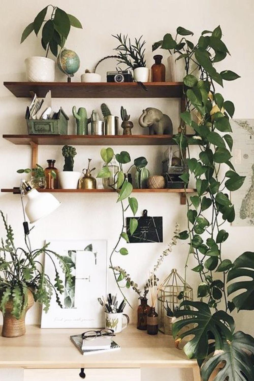 decorer le bureau avec des plantes 4