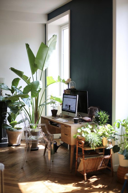 decorer le bureau avec des plantes 6