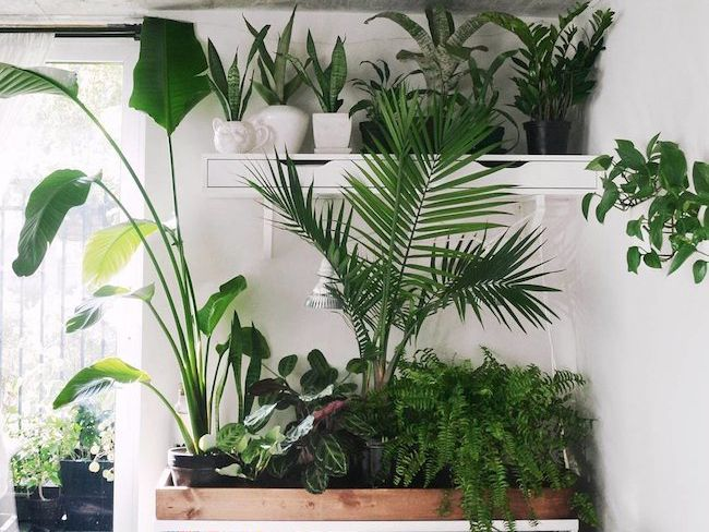 plante interieur isolation bruit deco