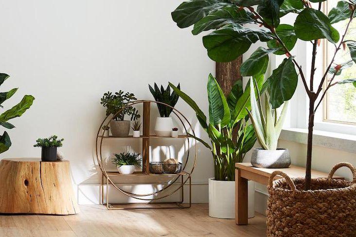 plante et mobilier en bois decoration idee