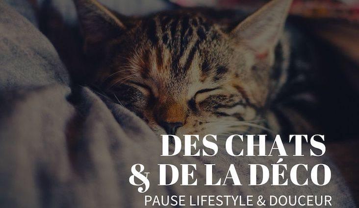 des chats et de la decoration pause lifestyle douceur et confort