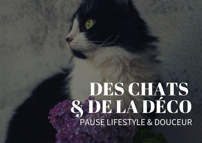 chat deco interieure fleur lifestyle inspiration pause douceur passion