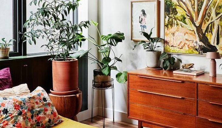 exemple deco vintage et plante buffet enfilade années 50 / 60 intérieur verdoyant